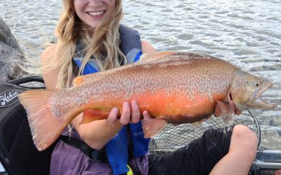 Giant Tiger Trout caught by a girl kayak fishing.